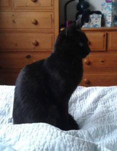 Terence our black cat
