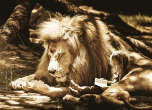 child reading with a lion
