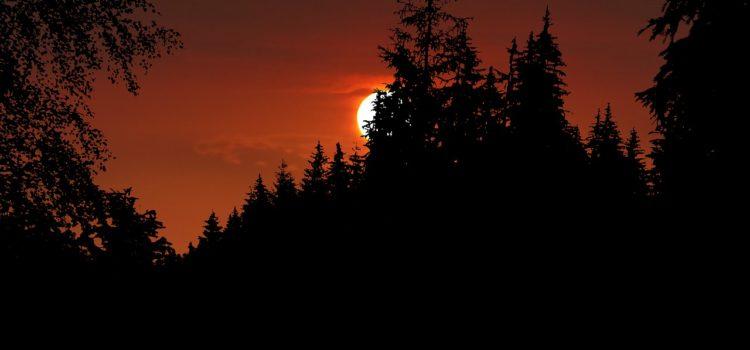 Sun hidden behind trees