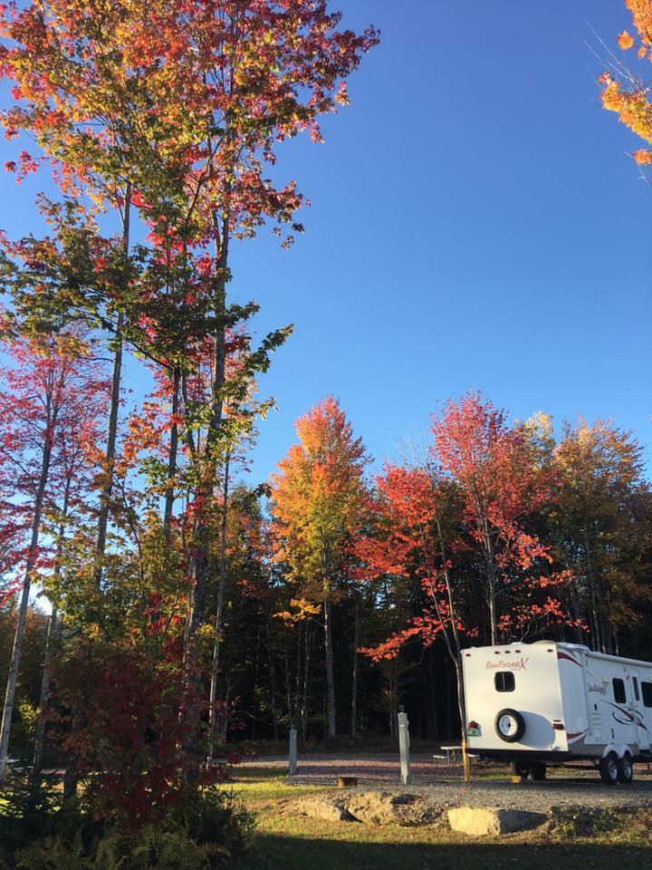 Maple trees Vermont
