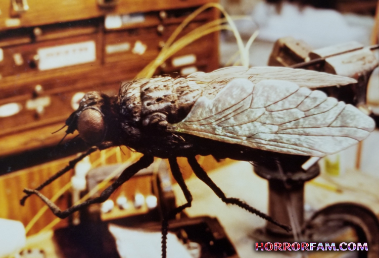 house fly special effect for zagnut scene in beetlejuice