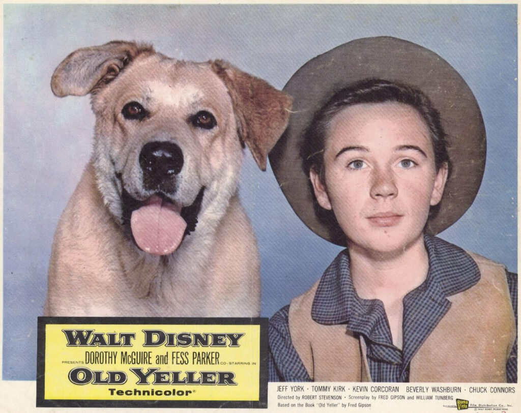 Lobby card from Old Yeller (1957) showing a yellow Labrador dog and child star Tommy Kirk, both looking benign/friendly