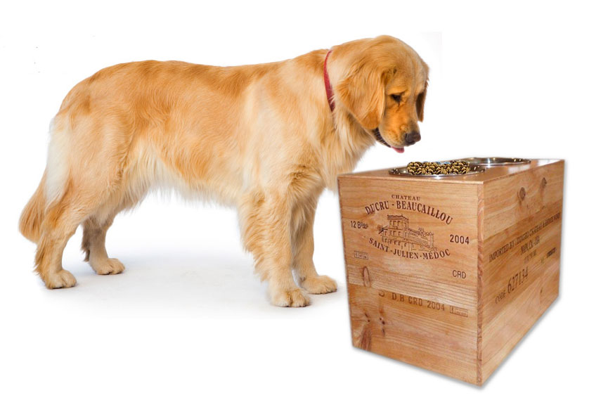 measure dog for elevated dog feeder