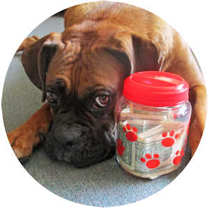 Donate to Help a Boxer Dog - Your Donation Is Critical