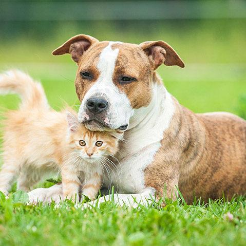 Cat adoption Bakersfield SPCA