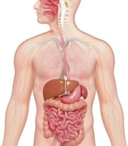 digestive system and oral sedation dentistry