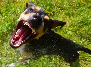 New York Dog Bite Lawyers