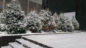 New York Snow Injury Lawyers