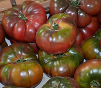 Fruits and Vegetables - Tomatoes