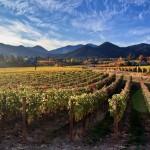 Ledger David's Varner Traul Vineyards in Talent, Oregon