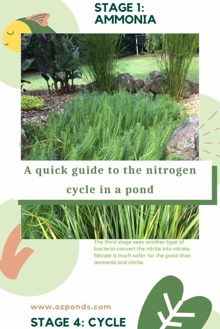 A quick guide to the nitrogen cycle in a pond-2