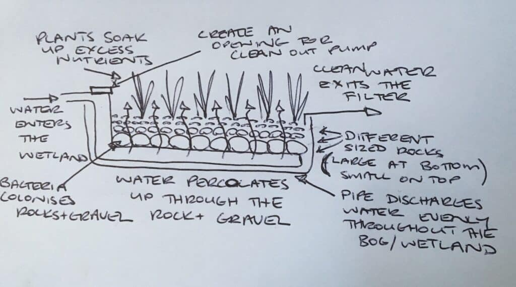 Pond bog/ wetland design principles