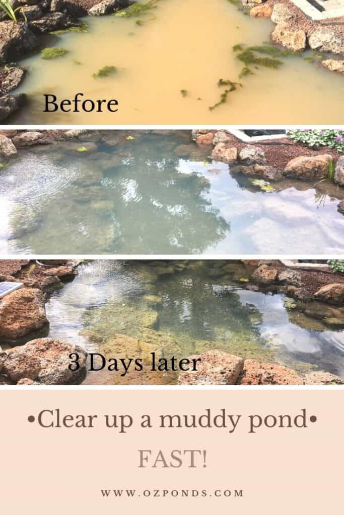 Clear up a muddy pond fast