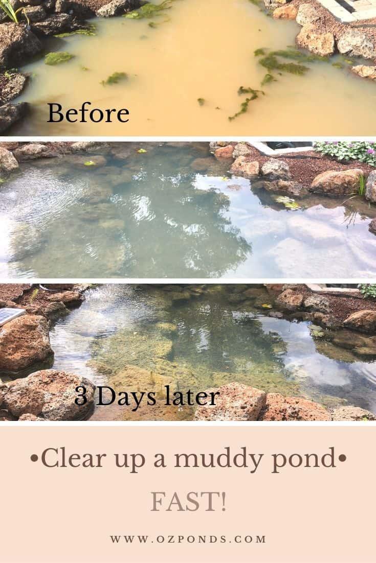 Clear a muddy pond fast