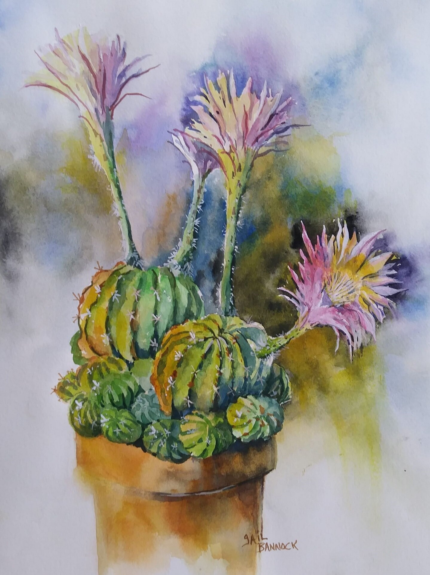 Bannock Gail-Four Blooms on the Cactus