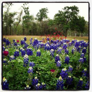 Houston's Memorial Park