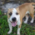 cute south florida dog rescue