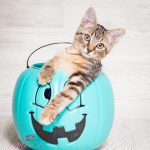 adorable cat rescue south florida