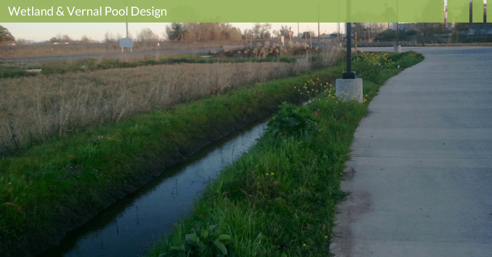 Melton Design Group, a landscape architecture firm, designed the bioswale filtration at Lundberg Farms in Richvale, CA.