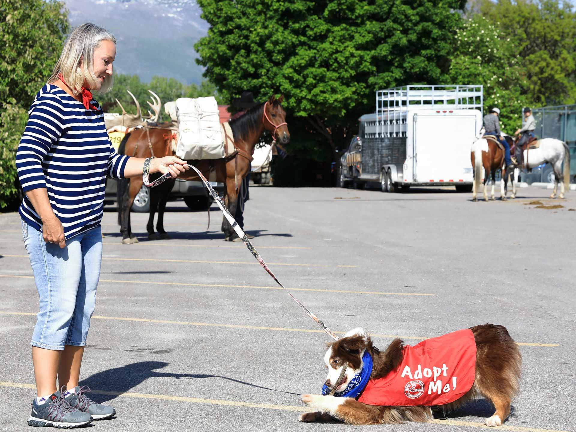 volunteer-and-dog