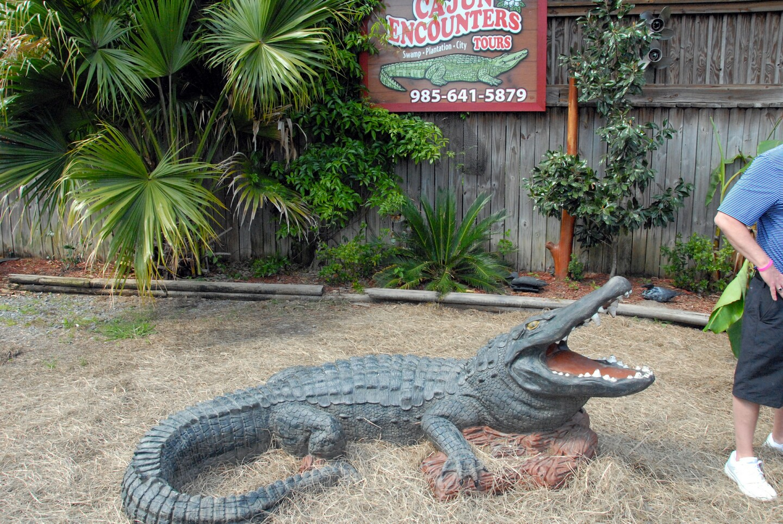 Swamp Tour - New Orleans