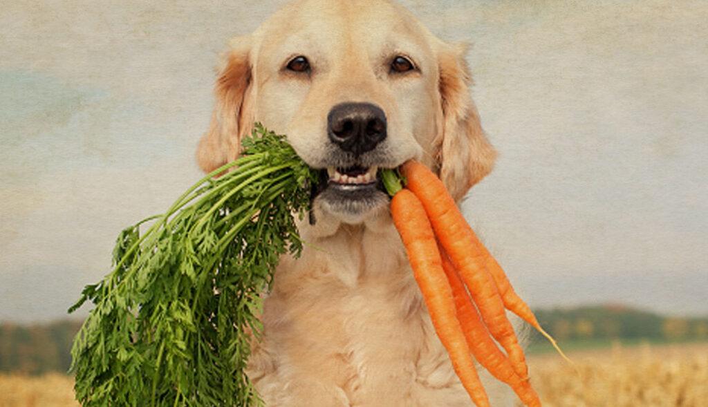 pets supplements ingredients