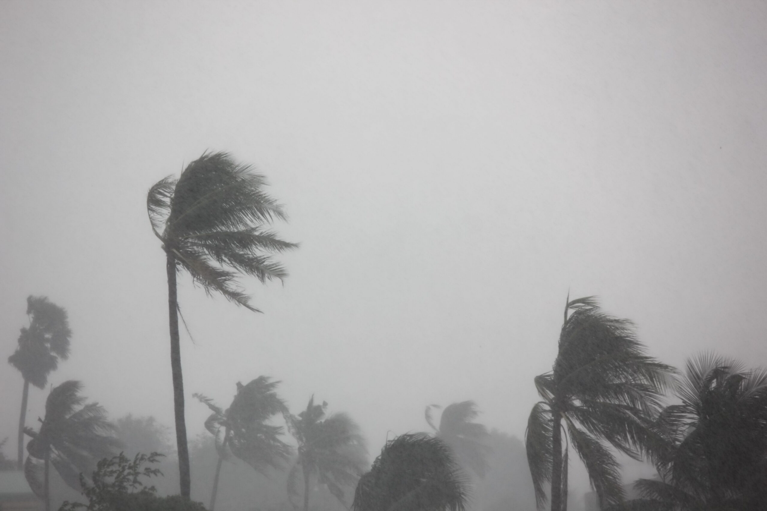 Tropical storm blowing palm trees hurricane