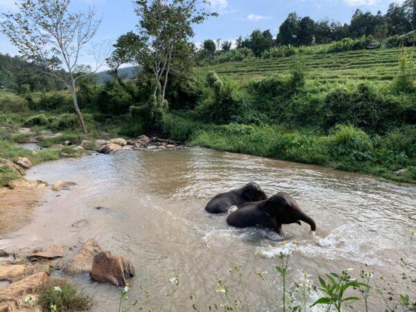 Baño en el río