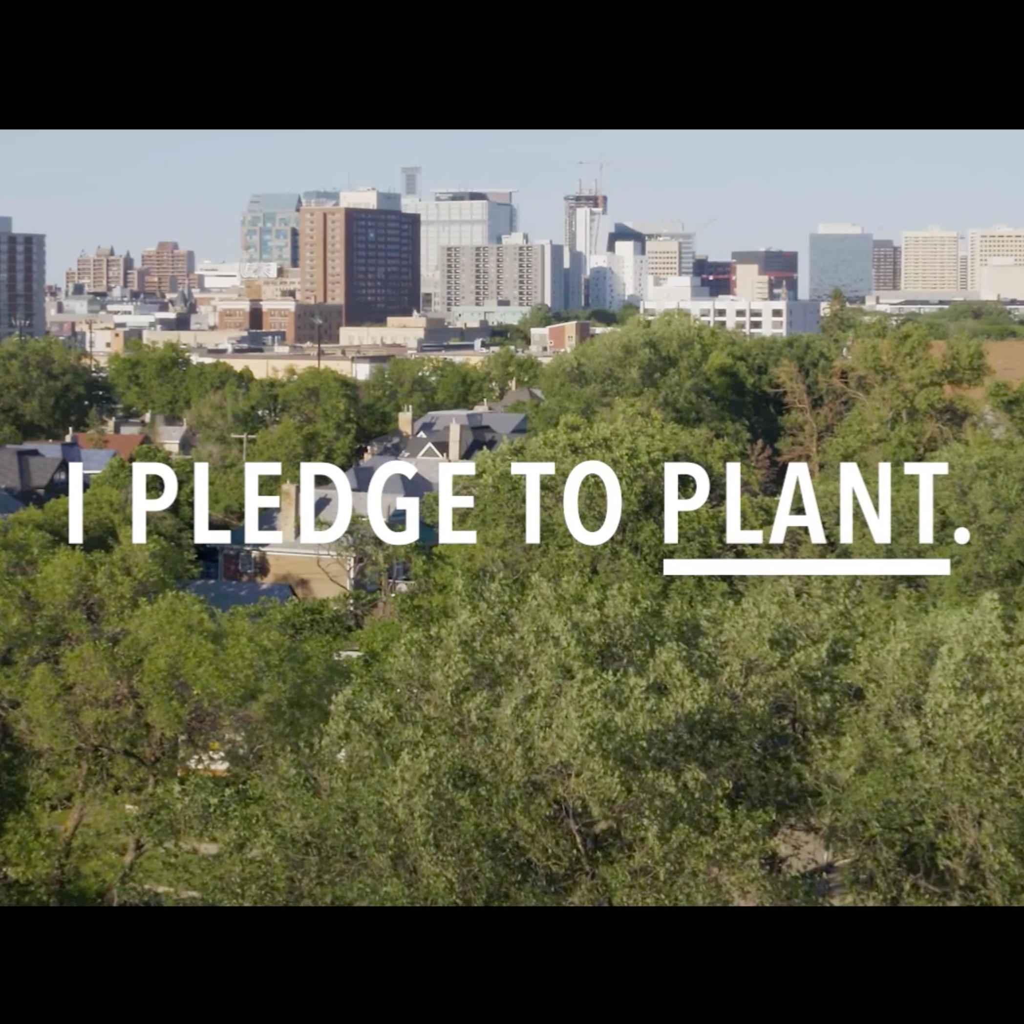 """Text: """"I pledge to plant."""" imposed over an arial shot of a tree line in Winnipeg"""