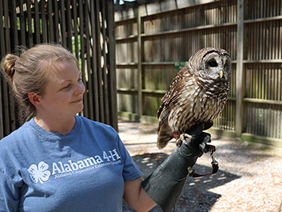 owl perched on a handler's arm