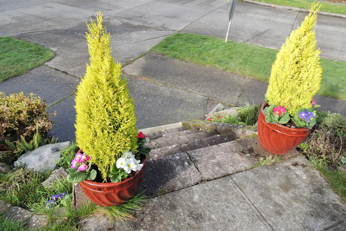 Kate Lloyd - early flower pots