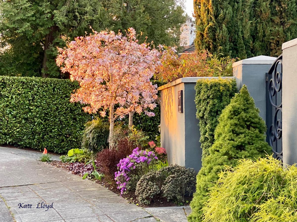 A neighborhood walk at sunrise. Love the warm colors!