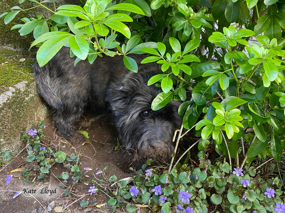 Kate Lloyd's dog Piper