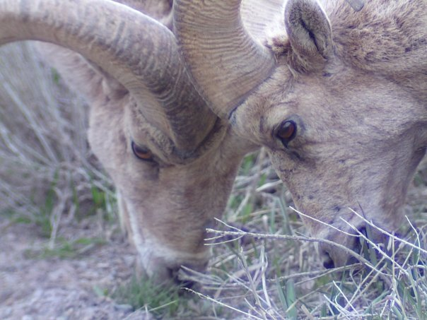 Winter Wildlife Restrictions Still in Effect