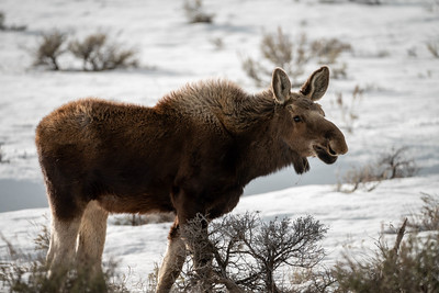Wyoming to Form Wildlife Taskforce