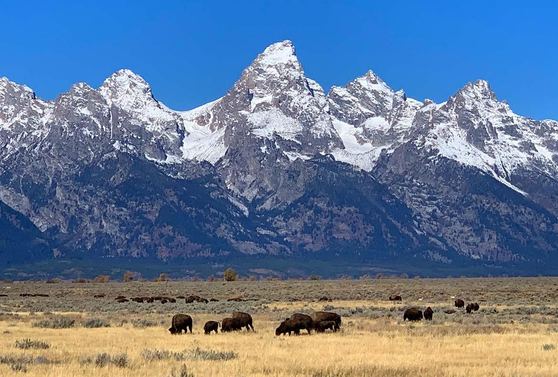 Yellowstone Grand Teton Parks Closed