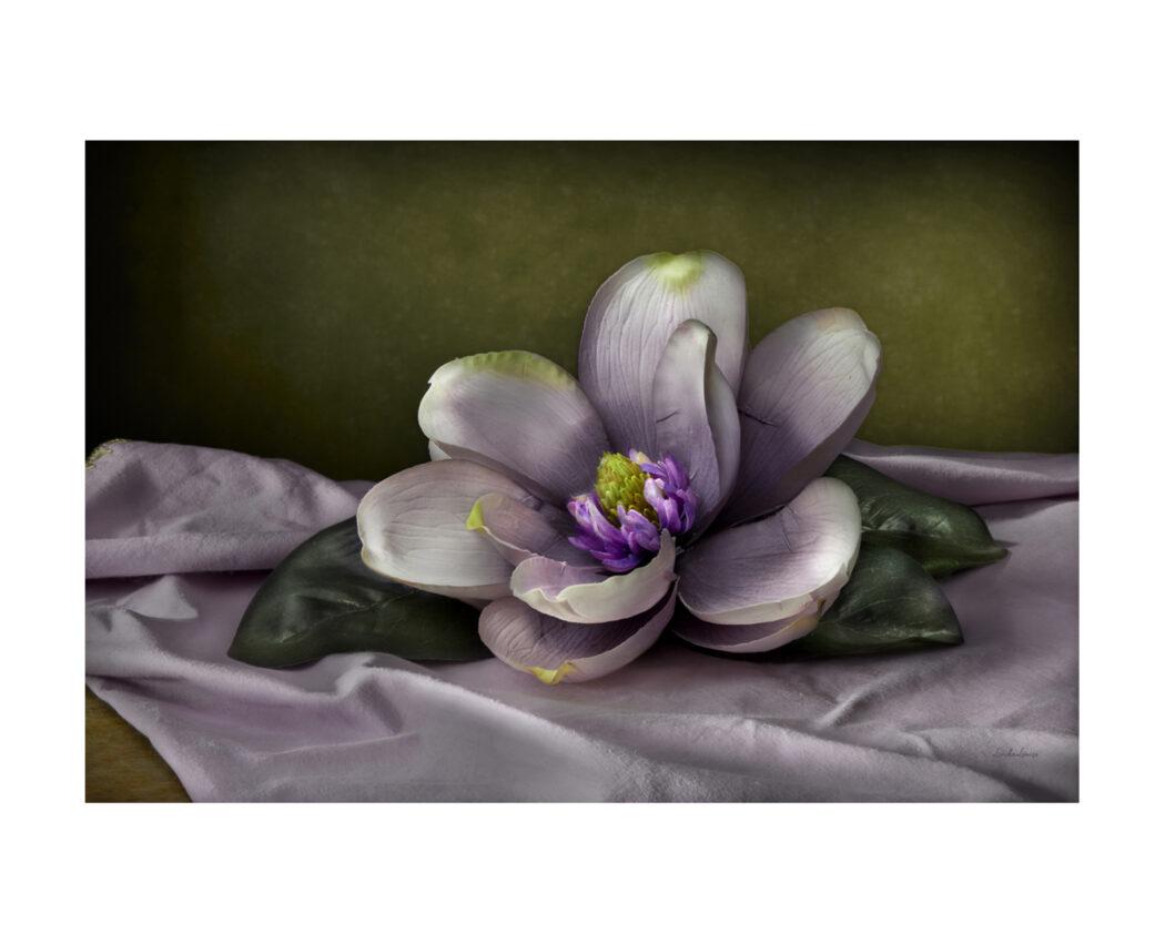 Linda Flicker, Purple Magnolia