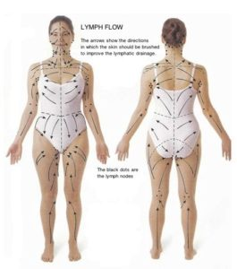 A chart we use for our lymphatic massages in Atlantic, GA