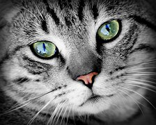 Enriching Cats' Lives