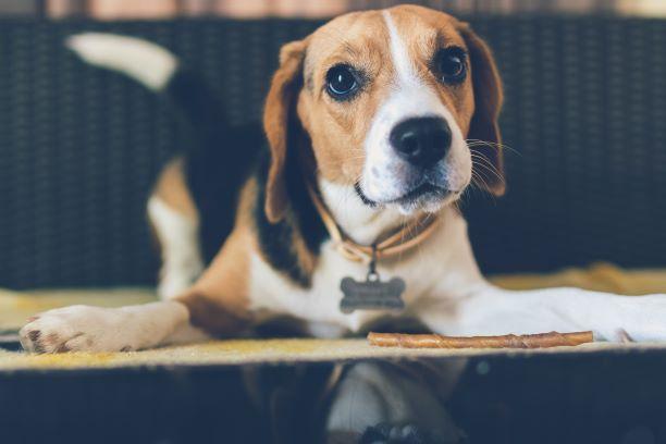 Canine Communication Signals