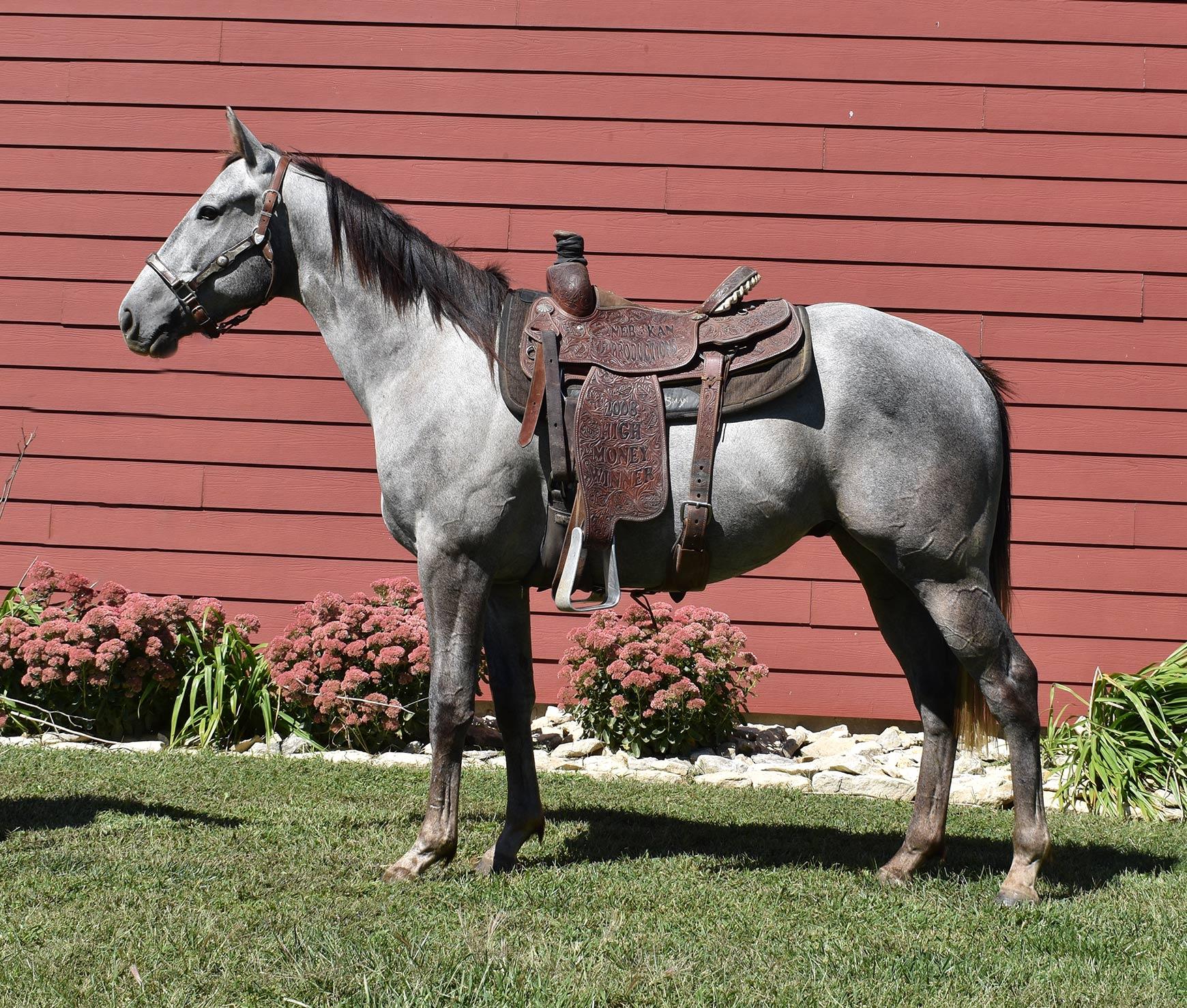 Barrel Horse Prospect