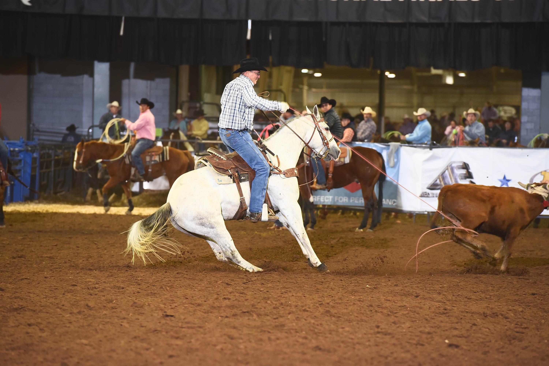 Team Roping horse