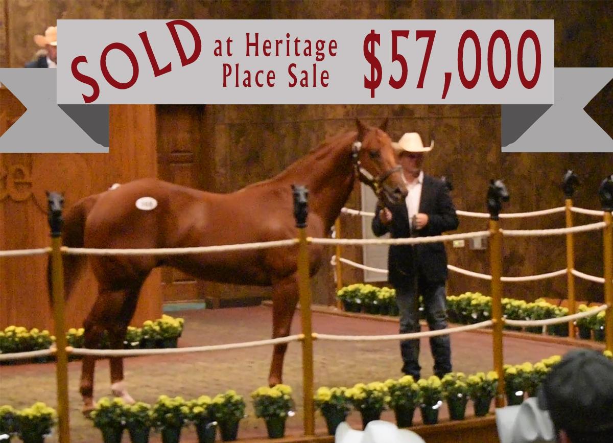 Race horse prospect