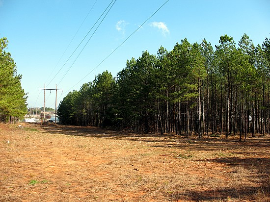 Regal Mountain Utility Line Land Clearing