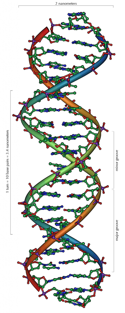 DNA_Overview-409x1024