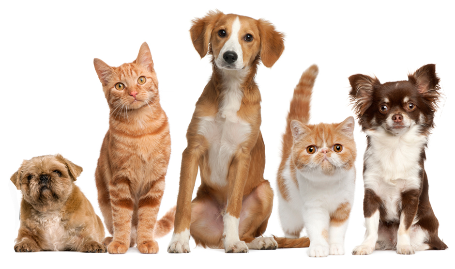 What is Pet Insurance?