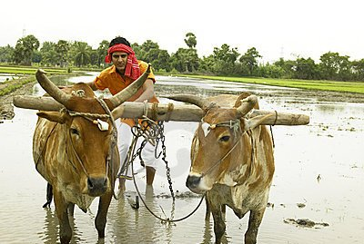 Workshop to Benefit Insecure Bihar farmers