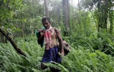 Students to celebrate Forests, amid looming crisis