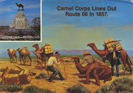 Have Camel, Will Travel?