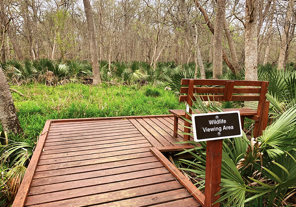 Palmetto State Park Offers Camping, Recreation